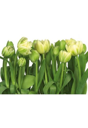 painel-fotografico-8-partes-tulips-cod-8-900